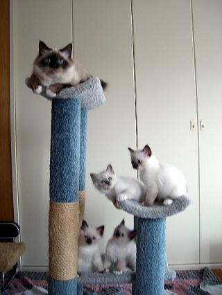 カプリスと最初の子猫達