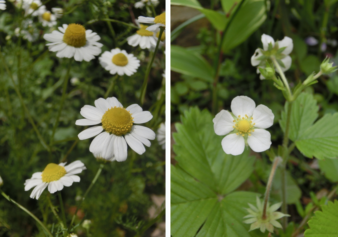 20150423_white flowers
