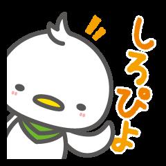 Shiropiyo_line_main.png