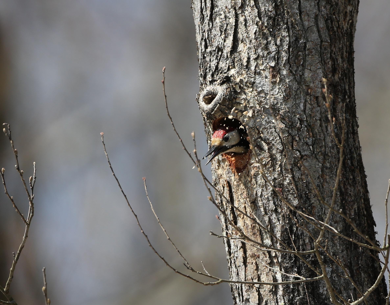 木クズを吐き出しています。