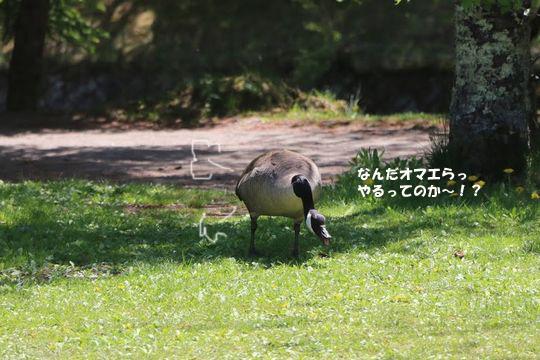IMG_4711のコピー