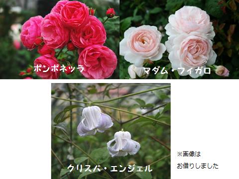 こんな感じの花