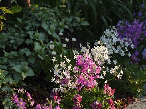 庭の様子①