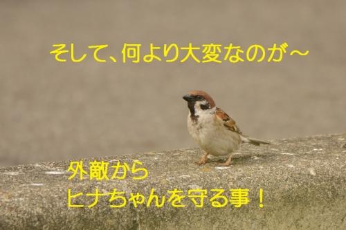 020_20150523003520578.jpg