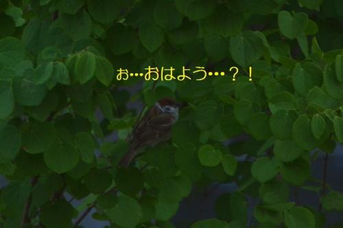 030_20150531180454e09.jpg