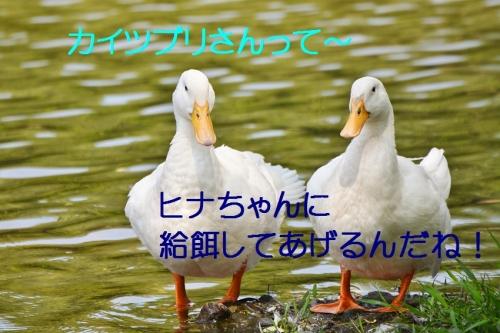 140_2015060823263873c.jpg