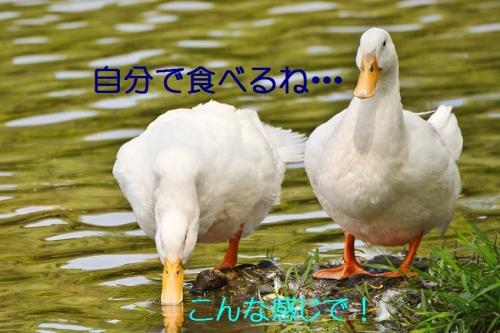 150_201506082326404a5.jpg