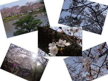 2015-03-29 大村公園桜