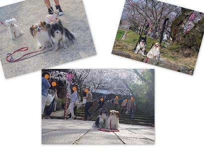 2015-03-29 大村公園桜1