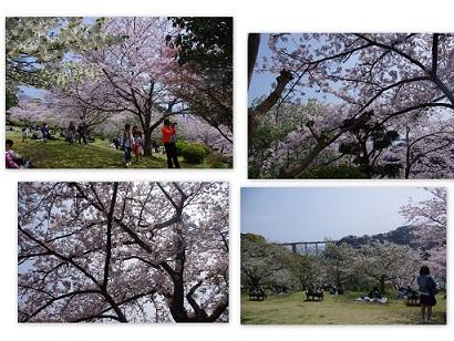 2015-04-02 ドッグランと花見2