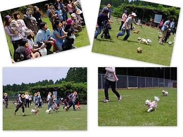 2015-05-17 春の運動会1