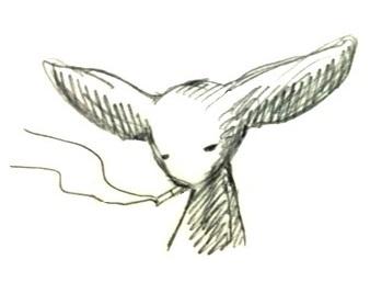 mok181-1.jpg