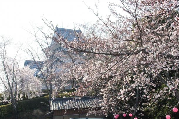 15-03-30-116_a.jpg