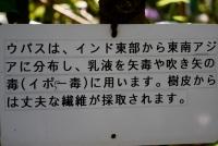 0014_kodaira04_DSC07466.jpg