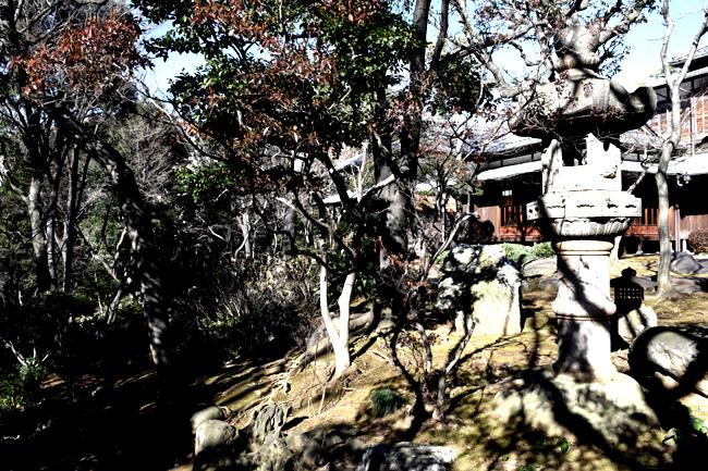 0056_daikamyama_01_DSC_1123.jpg