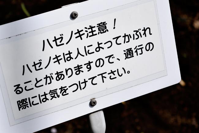 0056_kodaira04_DSC7551.jpg