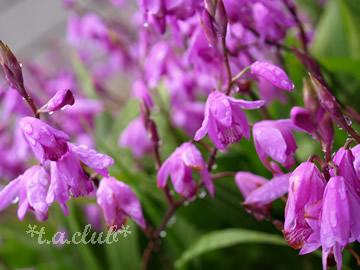 flower_1305_04.jpg