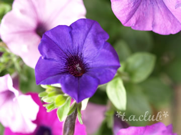 flower_1305_05.jpg