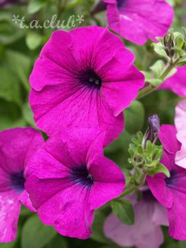flower_1305_06.jpg