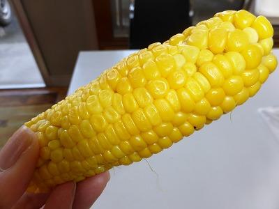 トウモロコシ3