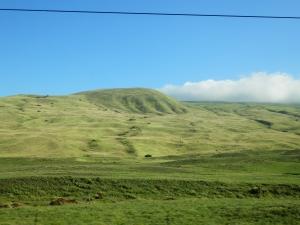 ハワイの牧場2