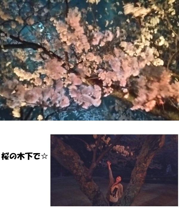 2015花見