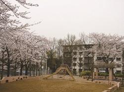 150201桜
