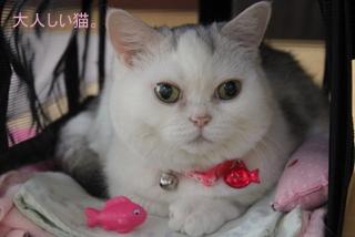 タマちゃん おとなしい猫