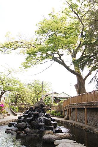 150430二之江神社の欅①