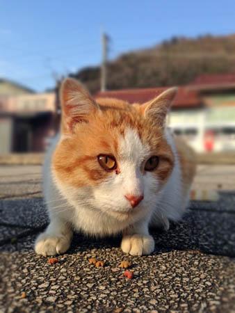 谷川猫2015.3.14