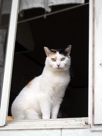 教会の猫2015.5.9①
