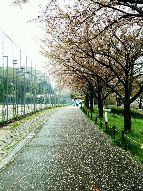 さくら 緑地公園2