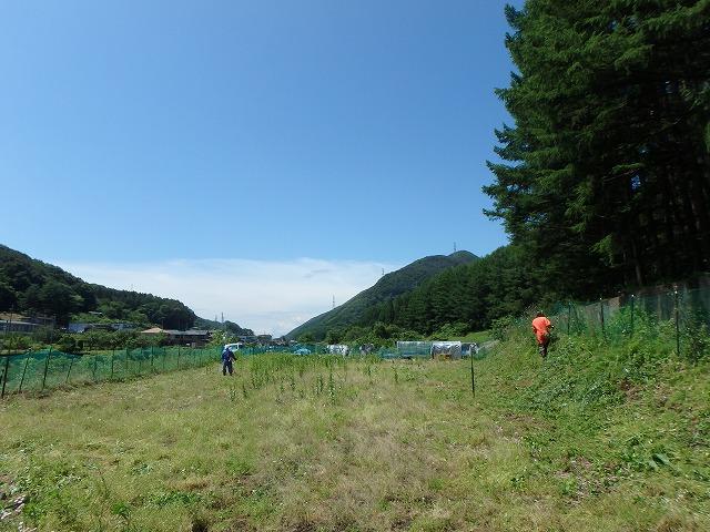 20150607そば畑 (4)