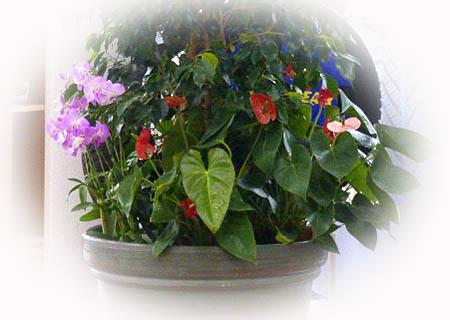 フロアの植物