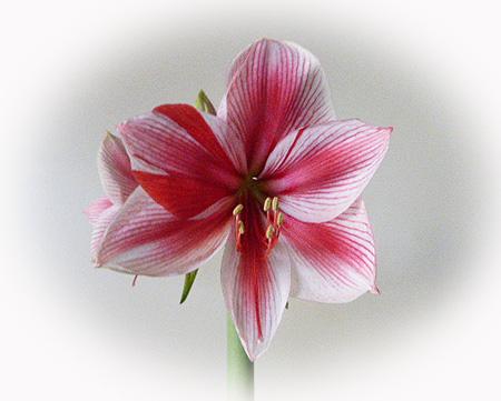 2 開花サンバ