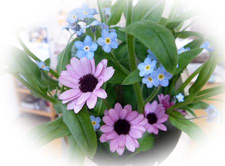 カウンタ-のお花