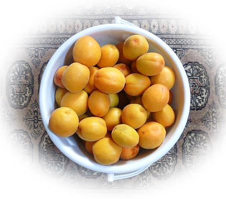 杏収穫!第一段