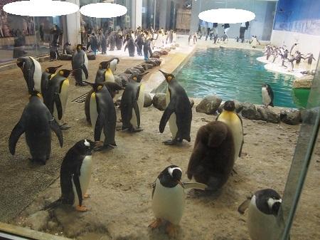 ペンギンの館