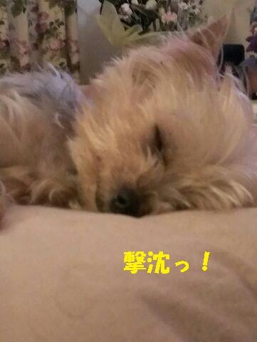 小梅 150622c - コピー