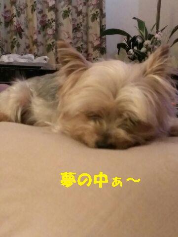 小梅 150622 - コピー