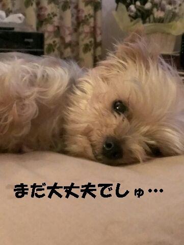 小梅 150622a - コピー