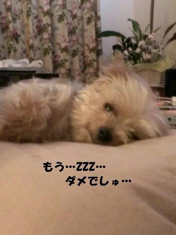 小梅 150622b - コピー
