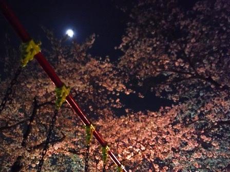 1藤丸の桜5