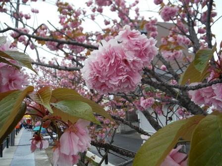 1一番街のお花見会2