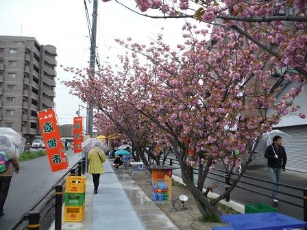 1一番街のお花見会3