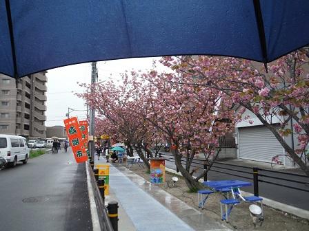 1一番街のお花見会4