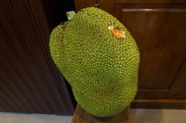 jack fruit1