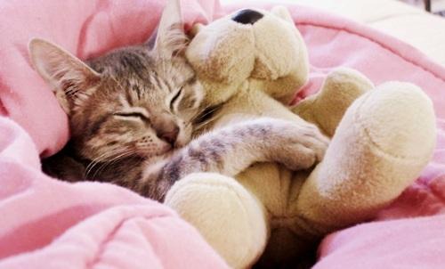 cute cat-1