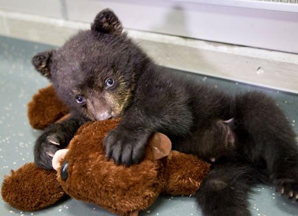 cute bear-2