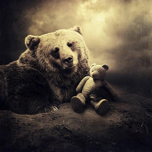 cute bear-1